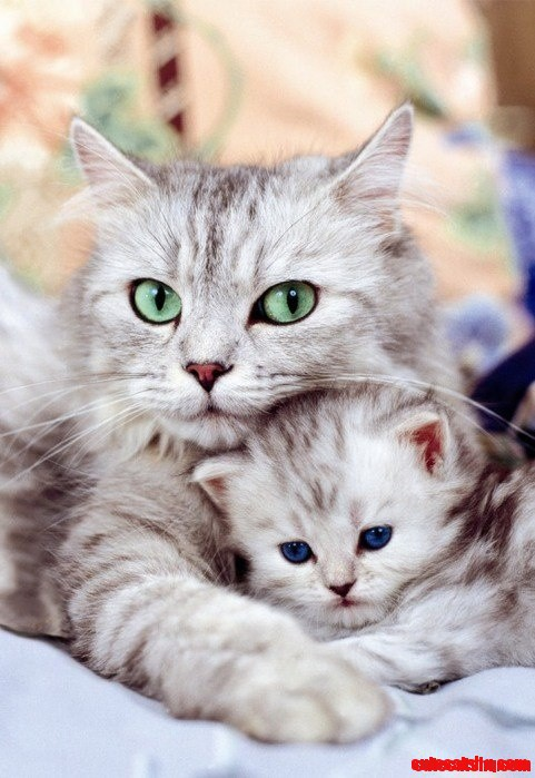 Awww Mom Cat And Kitten Cute Cats Hq Pictures Of Cute Cats