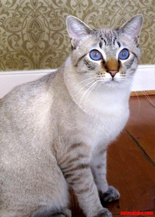 Beautiful Home Cat Cute Cats Hq Pictures Of Cute Cats