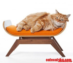 Canopy cat lounge for the cat with a taste for modern design