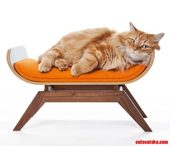 Canopy cat lounge for the cat with a taste for modern