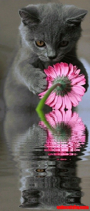 Cat flower reflection cute cats hq pictures of cute cats and cat flower reflection mightylinksfo