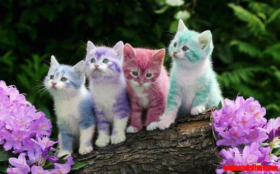 color cats cute cats hq pictures of cute cats and kittens free