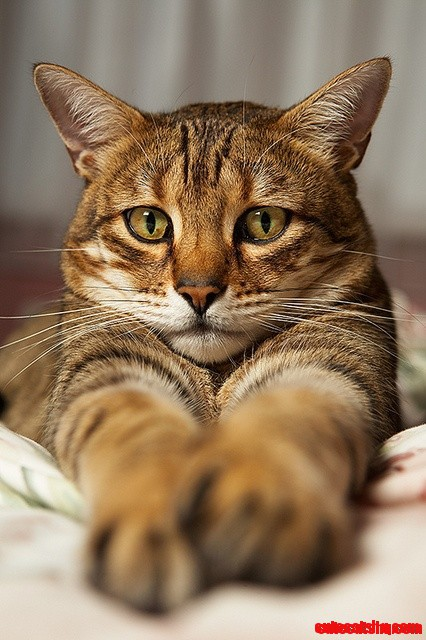 cute cat face cute cats hq pictures of cute cats and kittens