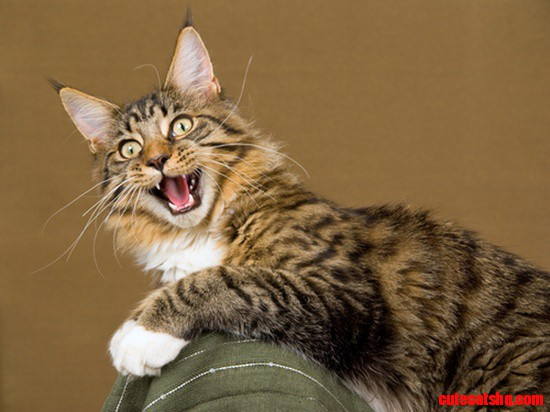 Exited Cat Cute Cats Hq Pictures Of Cute Cats And