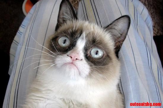 Best Cat Memes 2013 | www.imgkid.com - The Image Kid Has It!