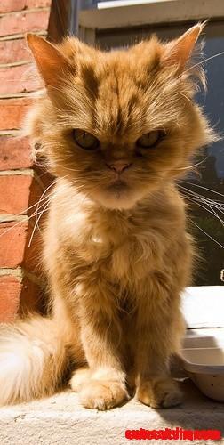 Grumpy kitty look