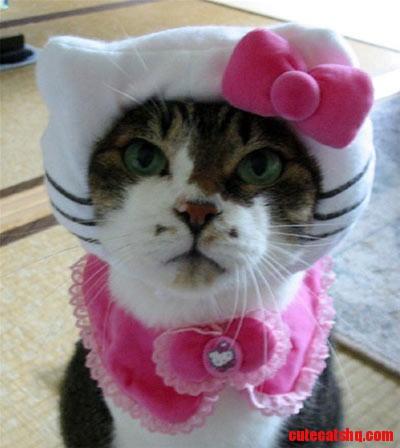 Hello Kitty kitty  Thanks, Dina!!!!!!!!!