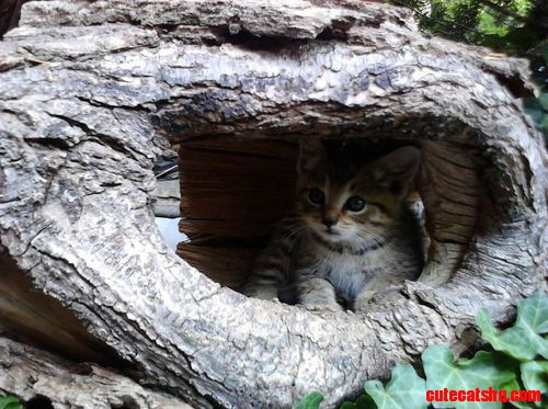 Little scared kitten | Cute cats HQ - Pictures of cute ...