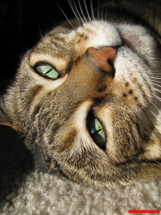 Nala Cat Cute Cats Hq Pictures Of Cute Cats And