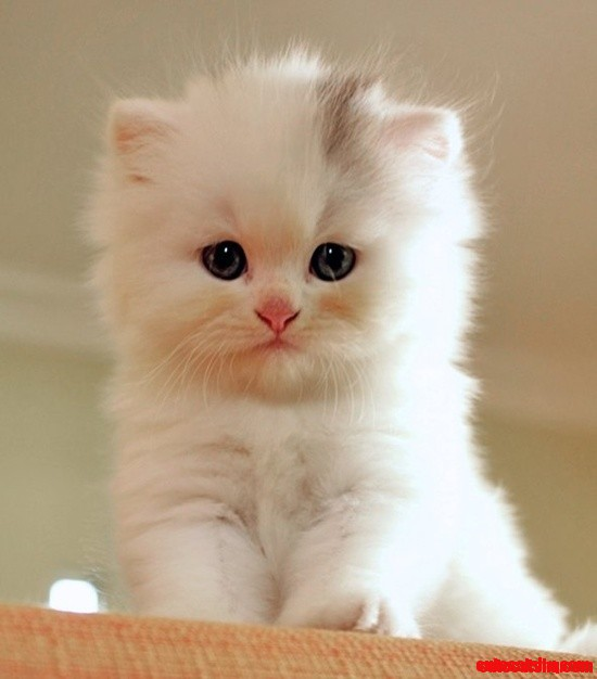 so adorable kitten cute cats hq   pictures of cute cats