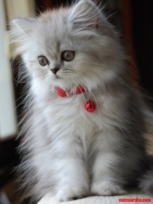 So Pretty Cute Cats Hq Pictures Of Cute Cats And
