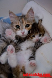 Tiny kitties