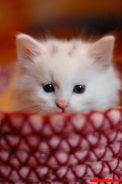 What A Sweet Kitten Face Cute Cats Hq Pictures Of Cute Cats And Kittens Free Pictures Of Funny Cats And Photo Of Cute Kittens