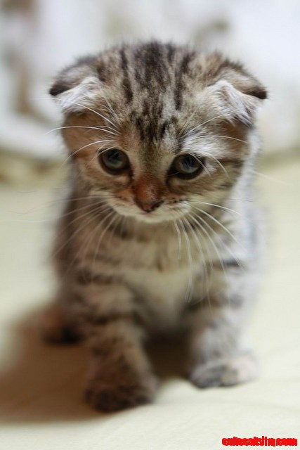 Youve Cat To Be Kitten Me Right Meow Cute Cats Hq Pictures Of
