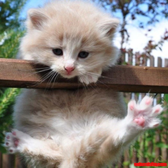 game grumps big cat