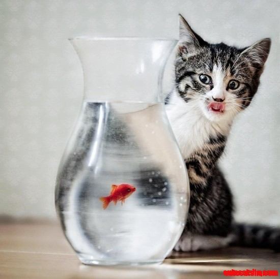 Poor fish cute cats hq pictures of cute cats and for Fish videos for cats
