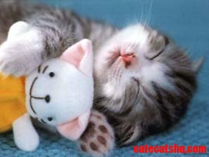 Cutty kitty
