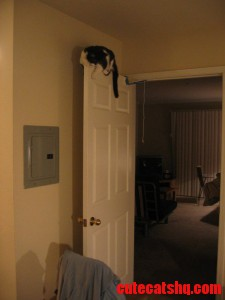 installed dangling cat toy from a door. next thing i see is this.