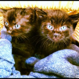 Found These Kittens Stuck In A Wall. I Couldn T Pass Up Two Black Cats