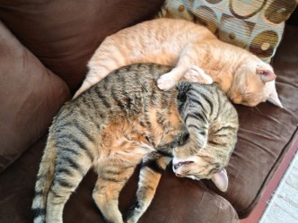 I Also Caught My Cats Spooning.