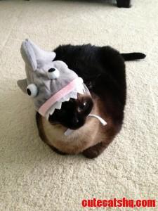 In Honor Of Shark Week