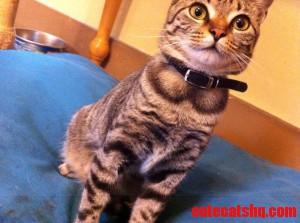 Round Collar Kitty
