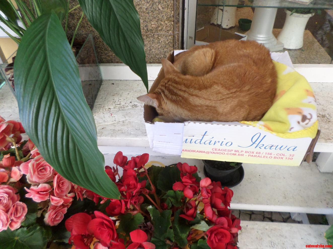 A Shopkeeper Was Kind Enough To Put A Box Out For This Cat In Rio De Janeiro