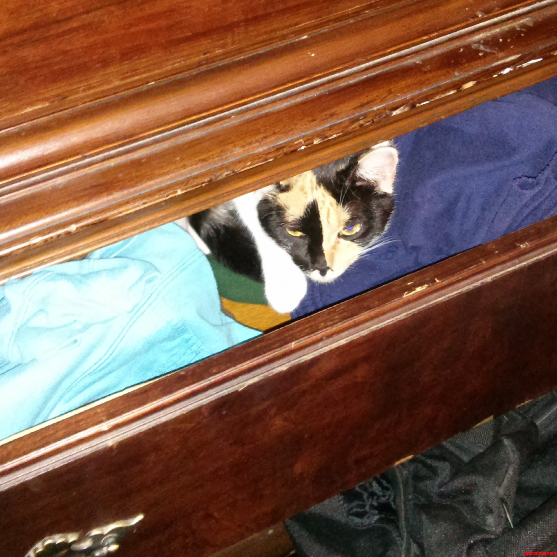 As A New Kitty Adoptee I mLearning I Can T Be Lazy About Closing The Drawers To Check The Closet.