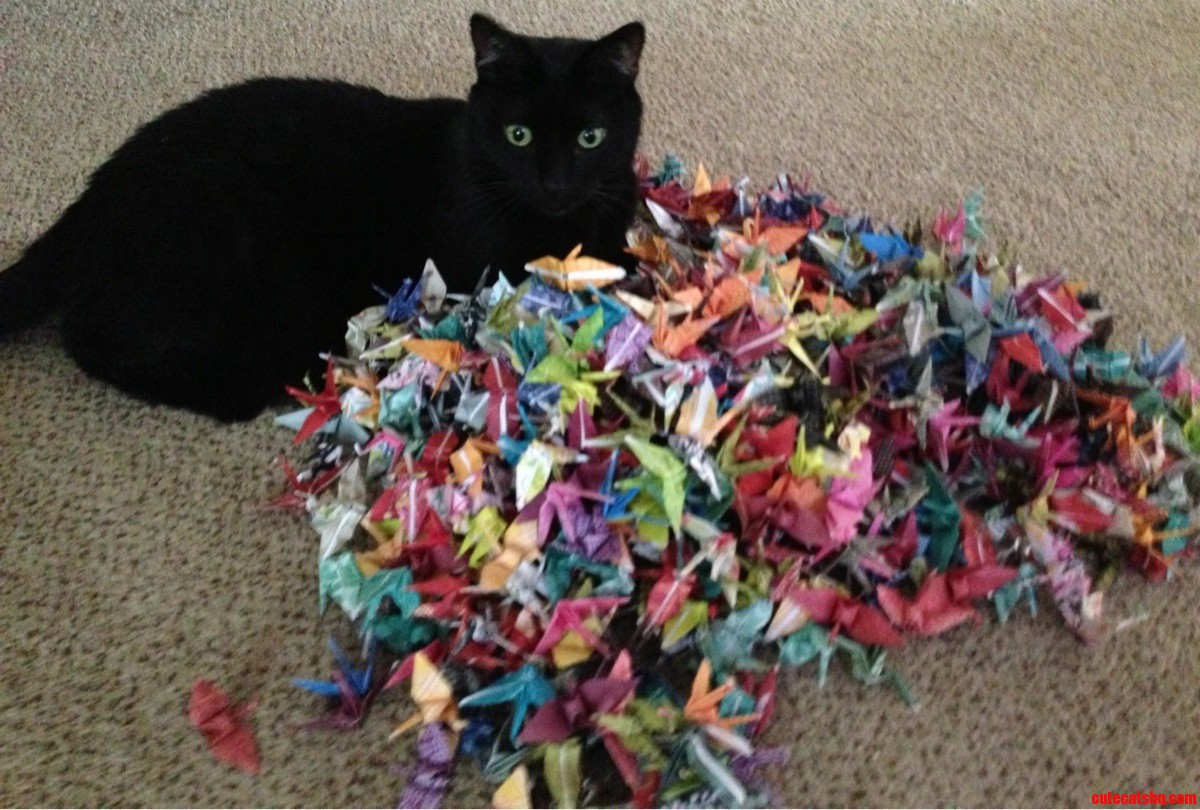 Boomer Playing In My 1000 Paper Cranes