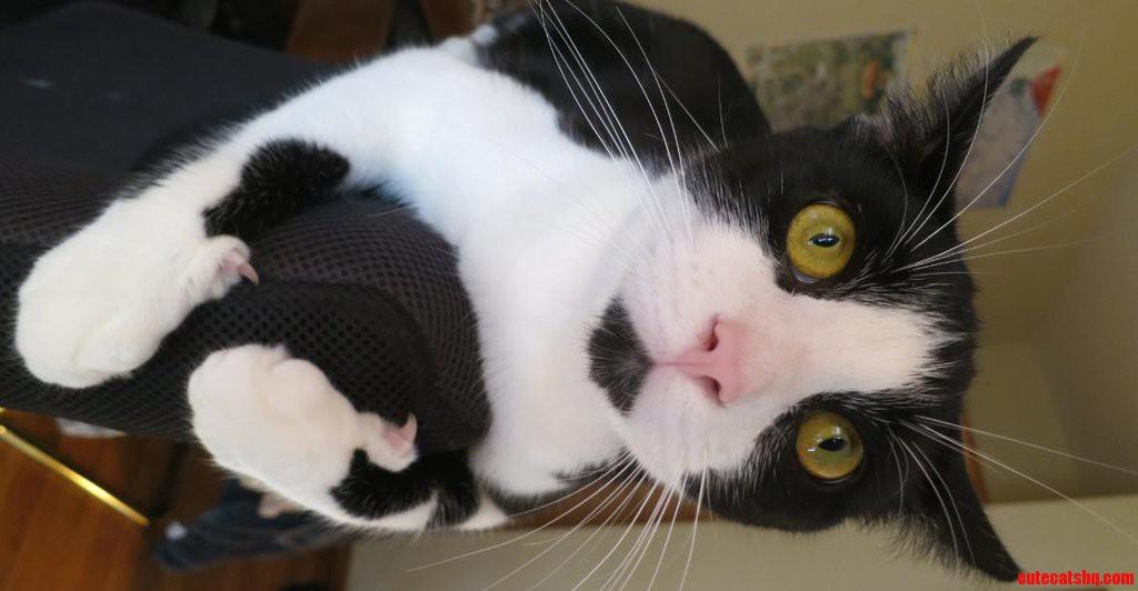 Cat Using Thumbs.