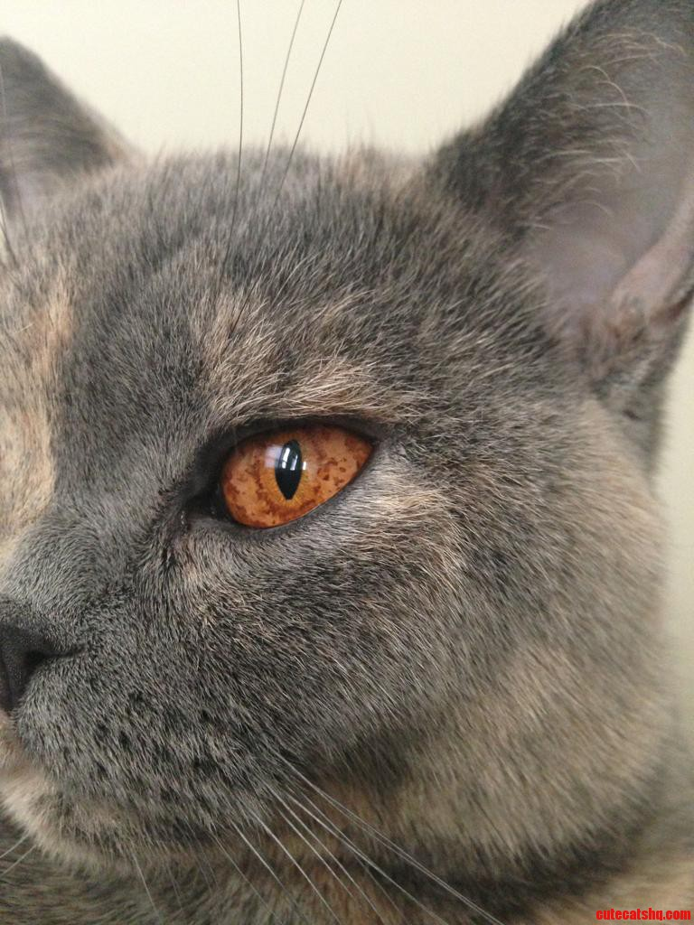 Cats Have The Coolest Eyes