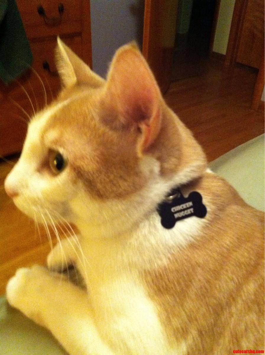 Funny Kitty Cat Photos