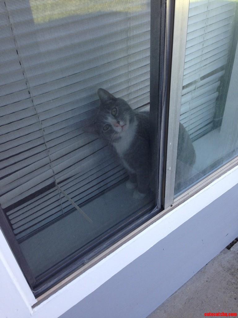 Derpy Kitty