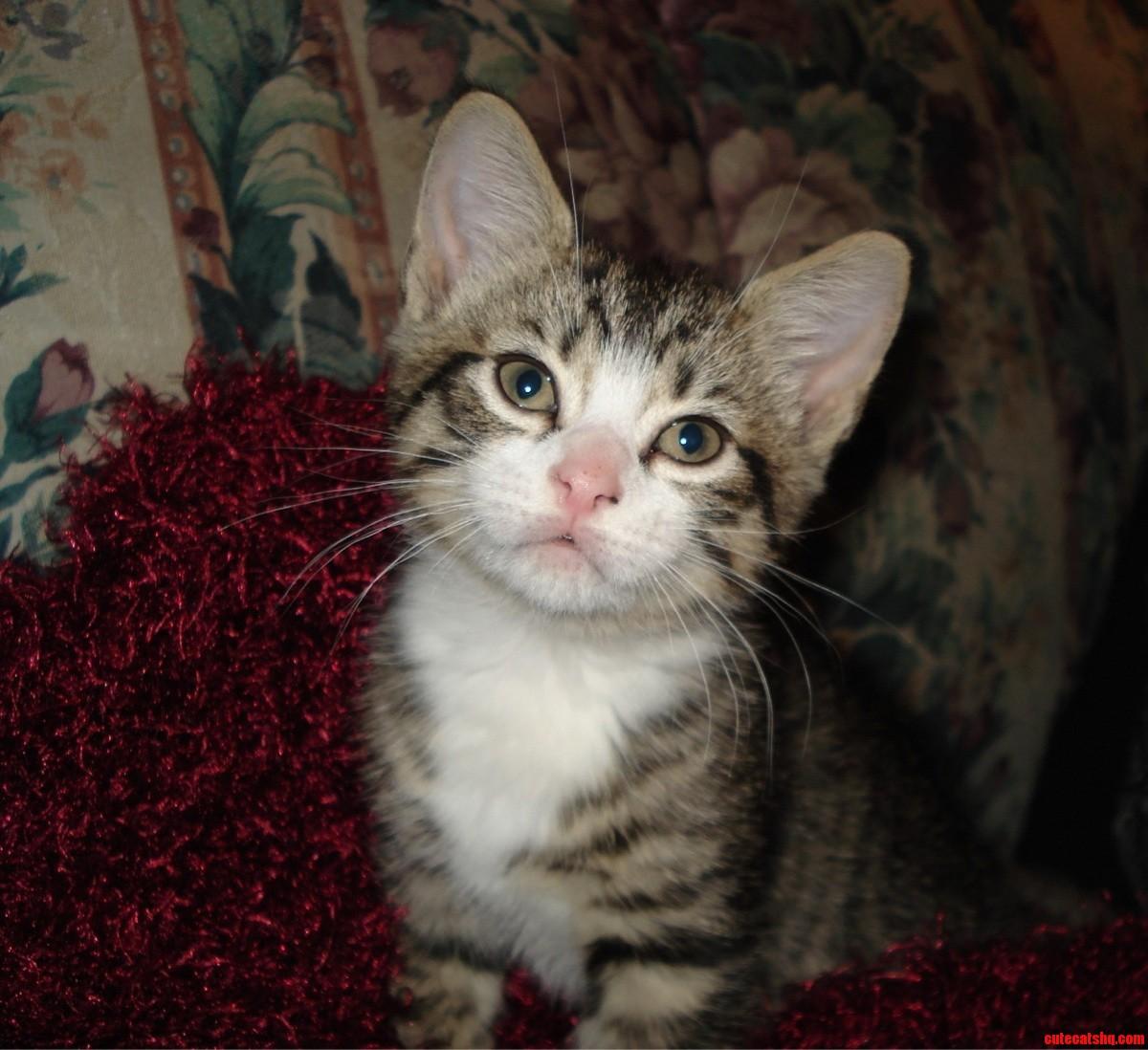 Felix When He Was A Kitten