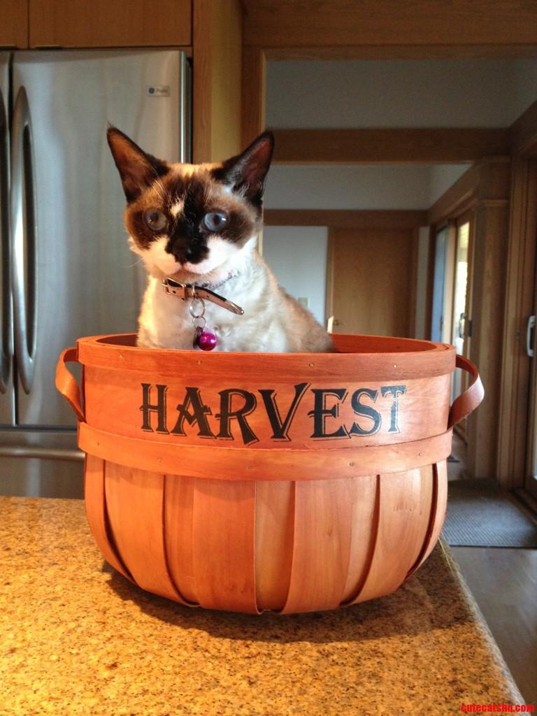 Harvesting Kitties