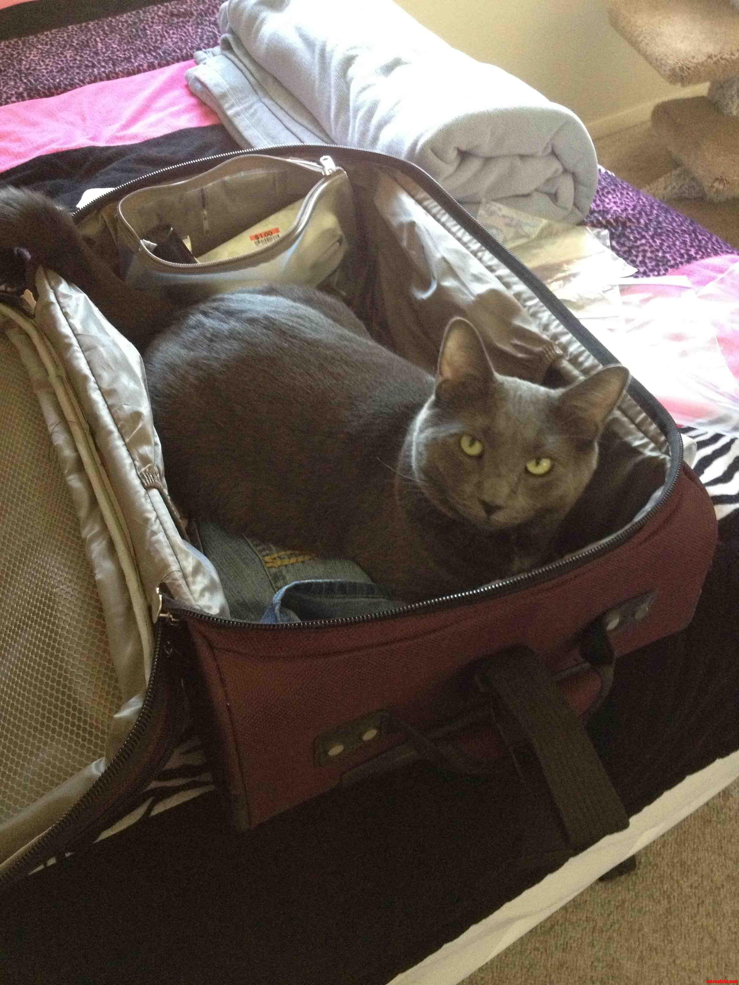 He Wanted To Come With Me To Mexico