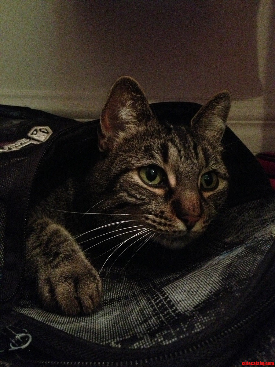 Her Absoloute Favourite Thing To Curl Up In Is My Bookbag P