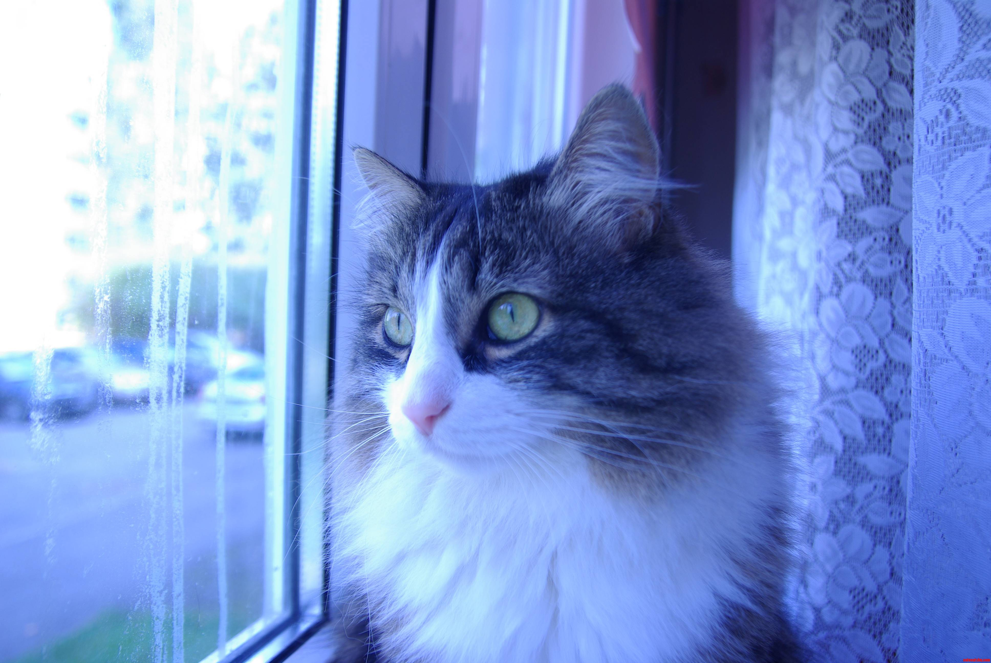 Heres My Cat  She Likes Looking Out Of The Bedroom Window.
