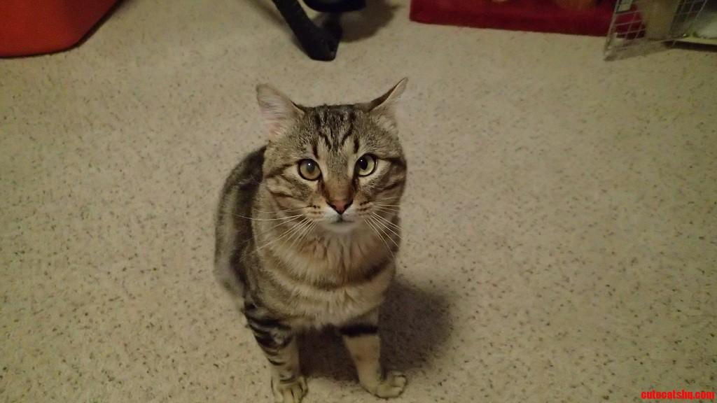 His Name Is Chipmunk