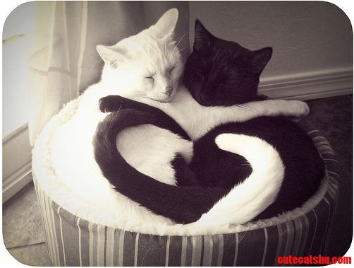 I Also Want A Black And White Cat Like This 3 So Adorable