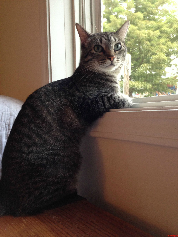 I Caught Wyatt Admiring The World.