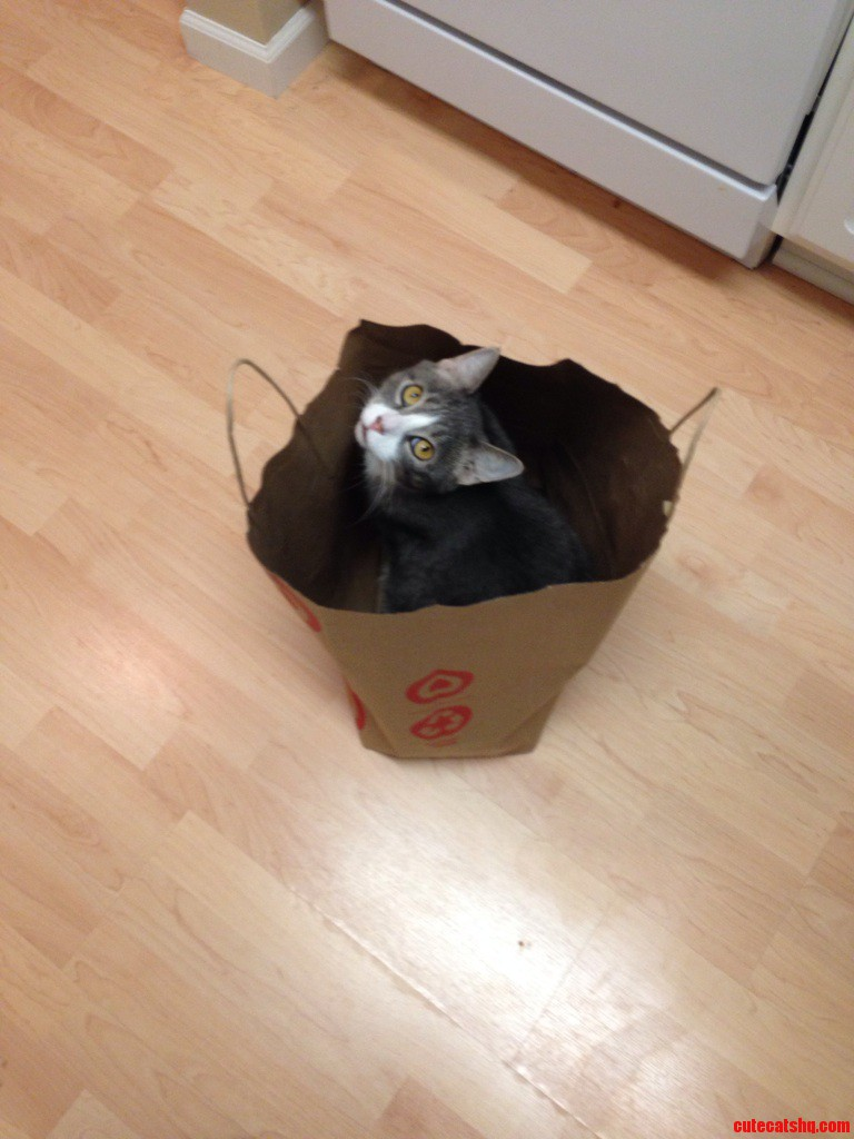 I Didnt Know Target Sold Cats…
