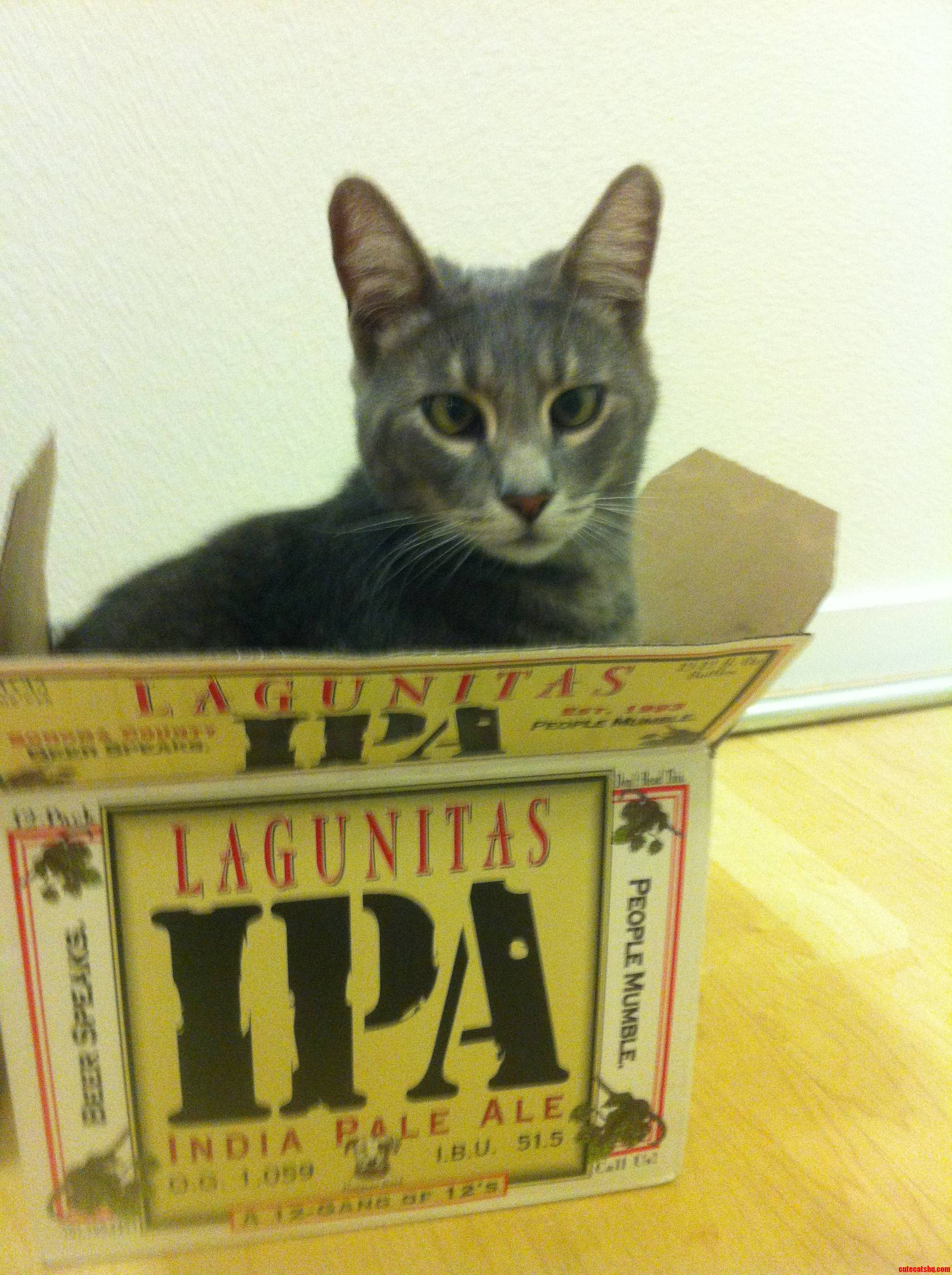 I Fits I Sits  After Party.