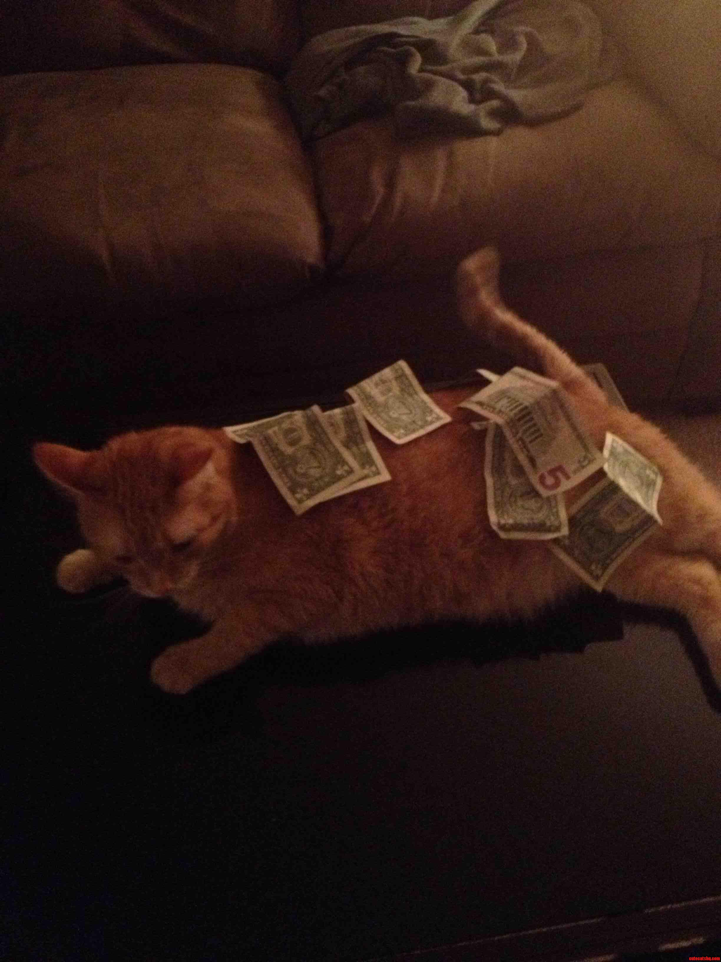 I Made It Rain On My Cat Unfortunetly He Did Not Strip For Me