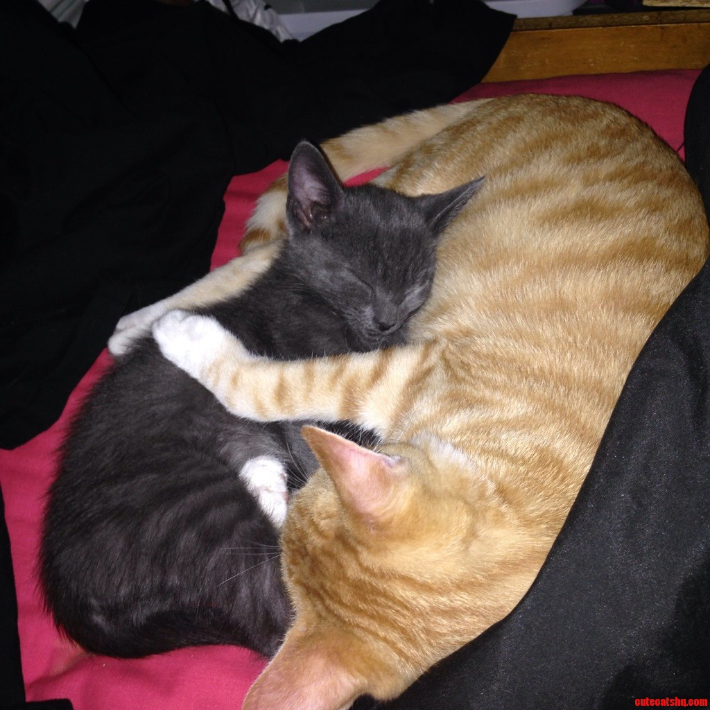 I Never Thought This Day Would Come. This Is The First Time I Ve Ever Caught Them Cuddling. I M Ecstatic