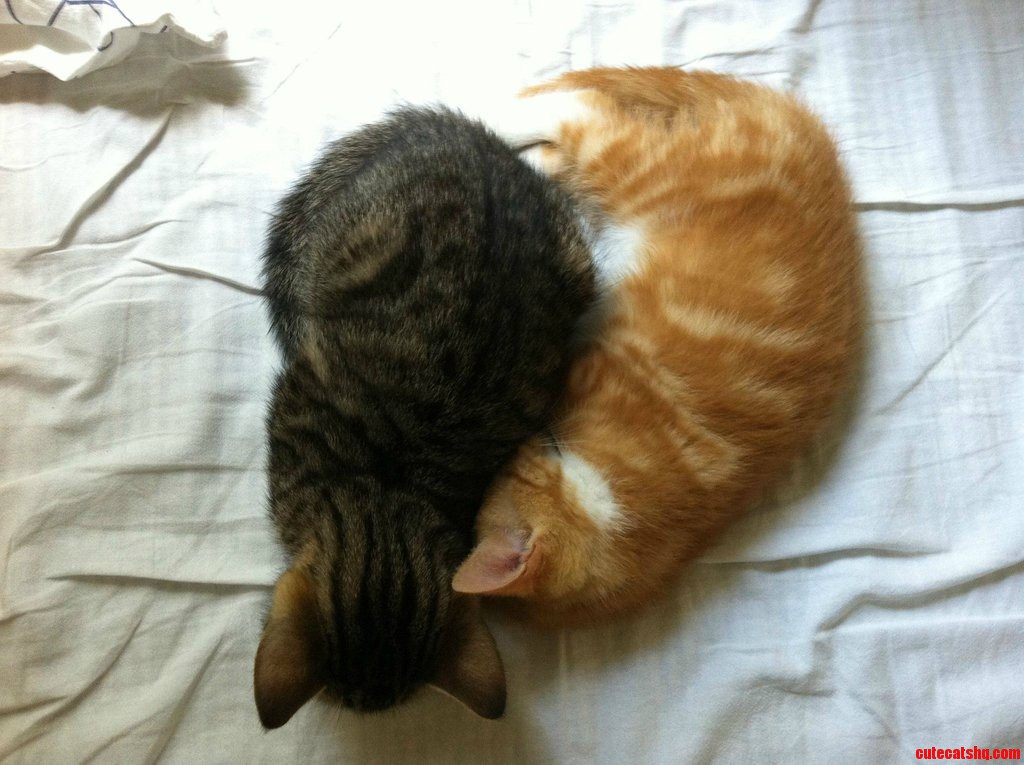 I Think These Two Brothers Like Each Other