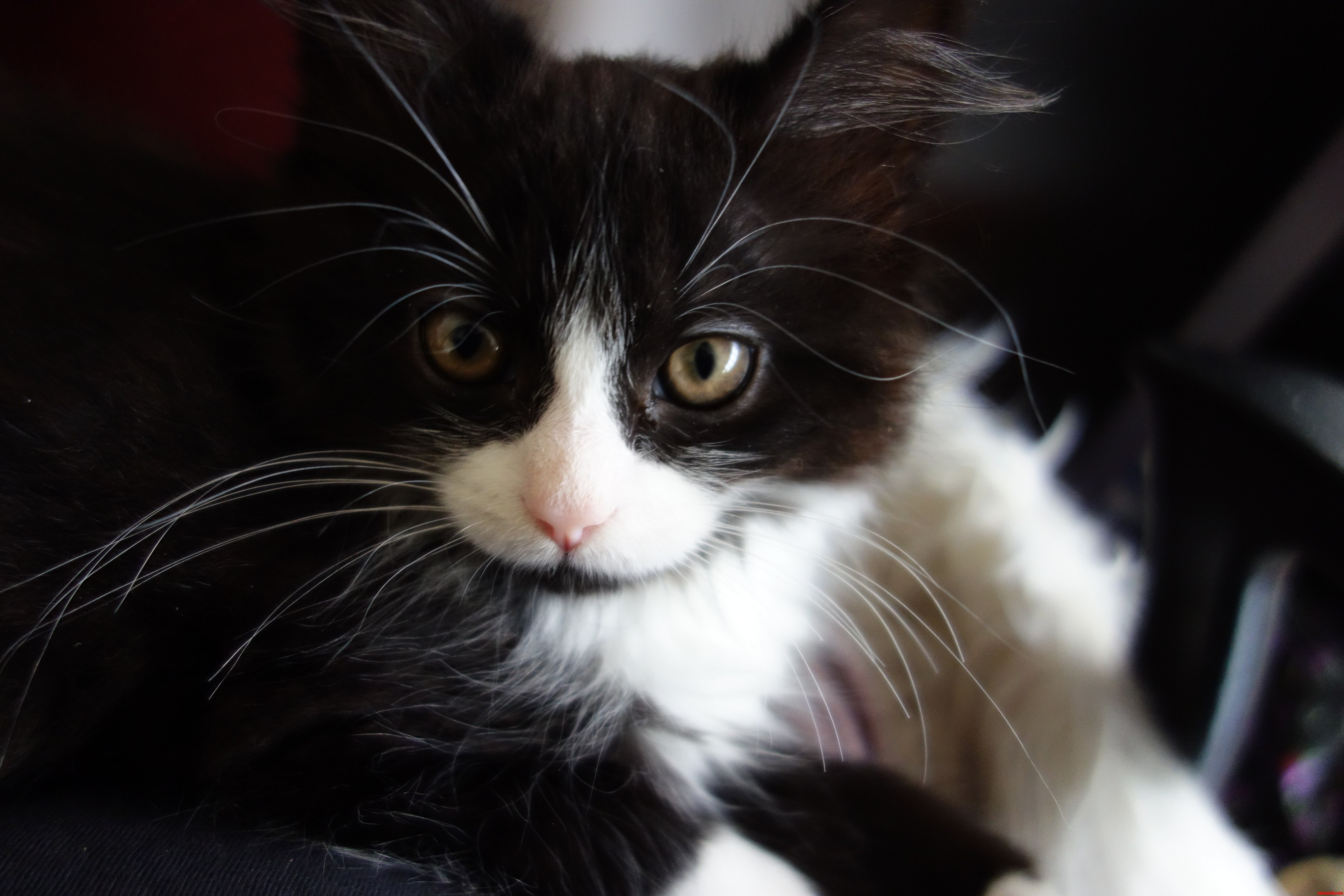 I Think We Should Re-Name Max  Mrs Whiskers
