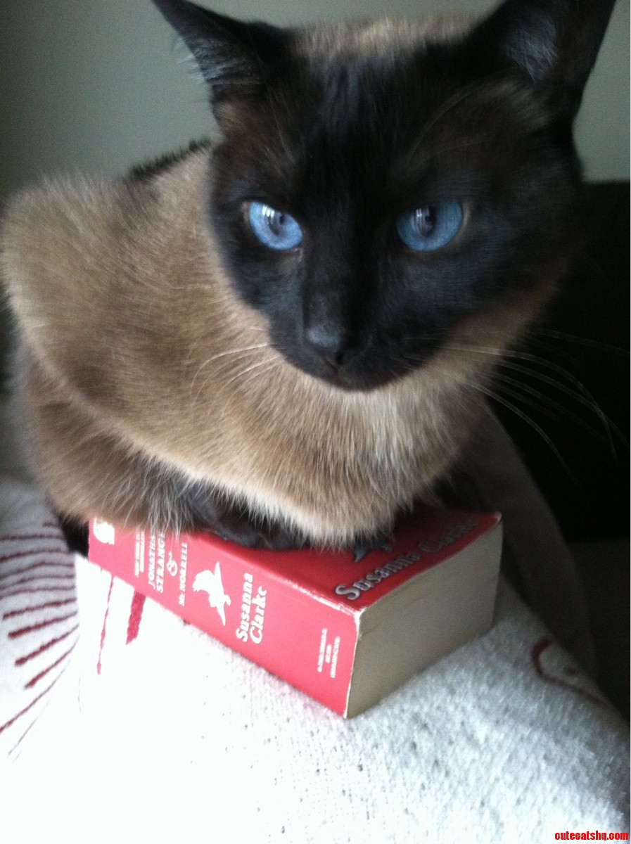 If I Sits On Her Book  She Cannot Read All Day.