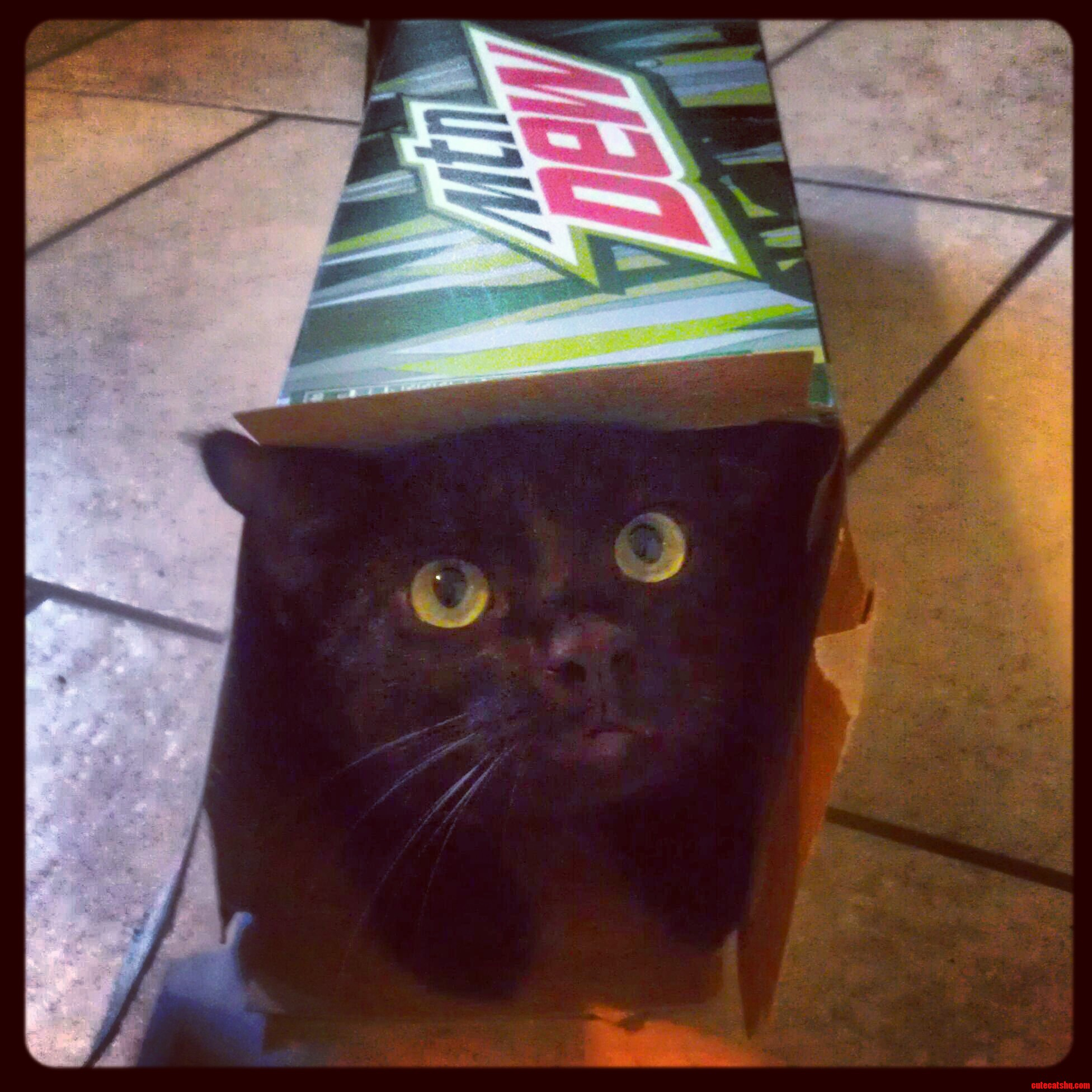 If It Fits  I Sits…In The Mt. Dew Box.