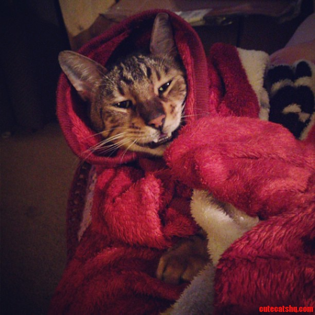 Jack The Little Red Riding Kitty